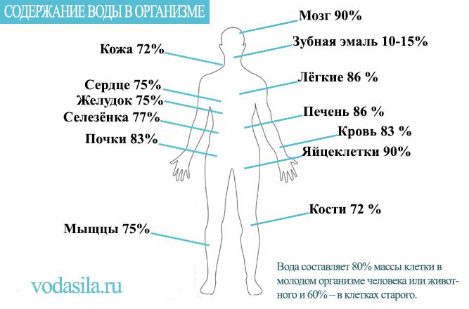 Содержание воды в теле человека