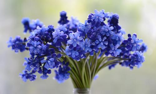 10 полезных лайфхаков, чтобы цветы дольше стояли в вазе