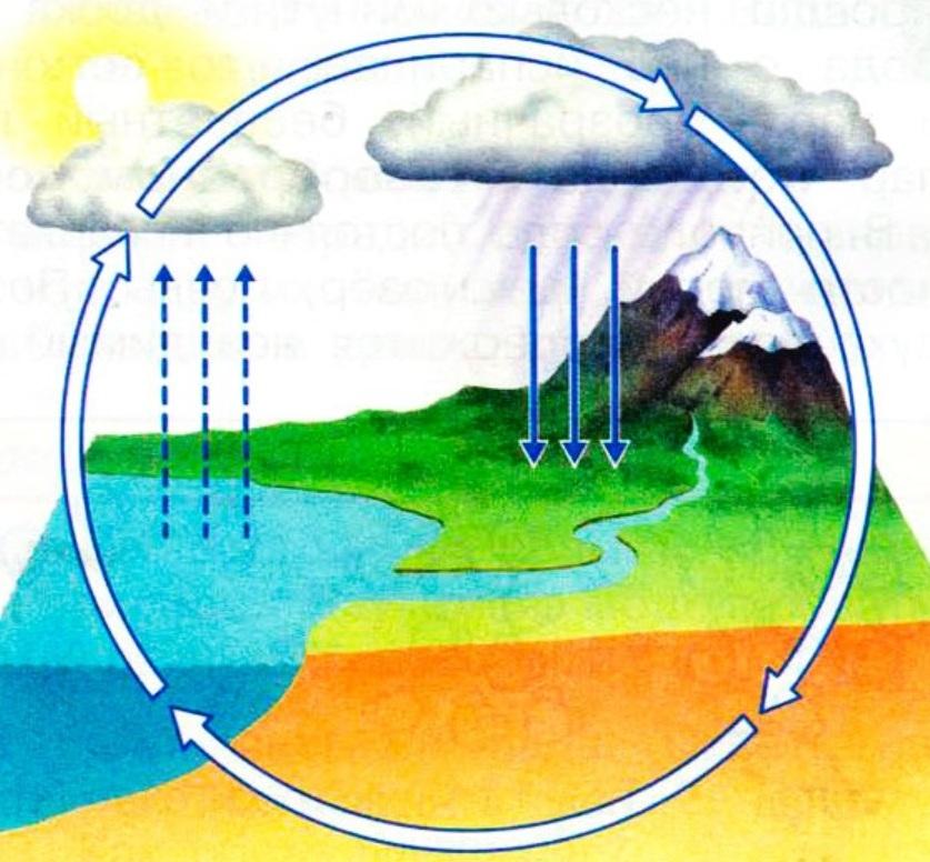 Круговорот воды в природе: информация для детей и взрослых